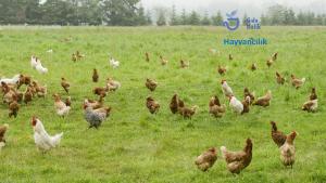 Küçük Bir Çiftlikte Kolayca Yetiştirilebilecek  Hayvanlar