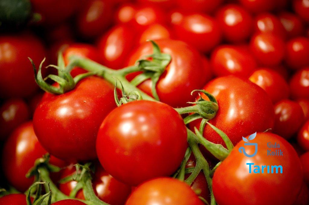 Yeni Sistem ve Gıda, Tarım ve Hayvancılık için Öneriler 1