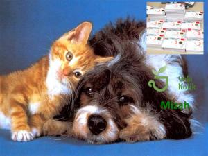 Kimlik Zorunluluğu  Kedi ve Köpekleri İsyan Ettirdi