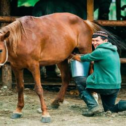 At Sütü İçmek Haram mı?